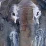 pikou-elephant1